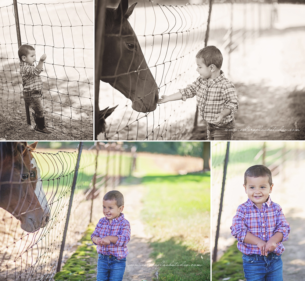 kid-horses-photography-session