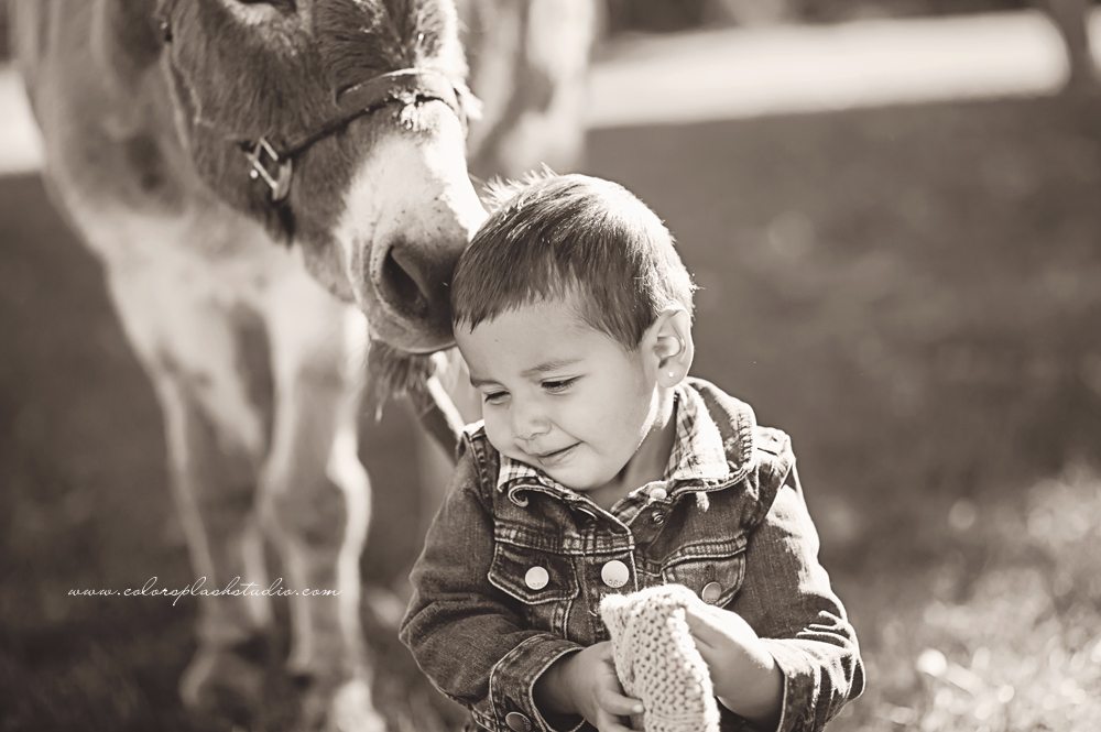 kids-donkey-photography-session-2