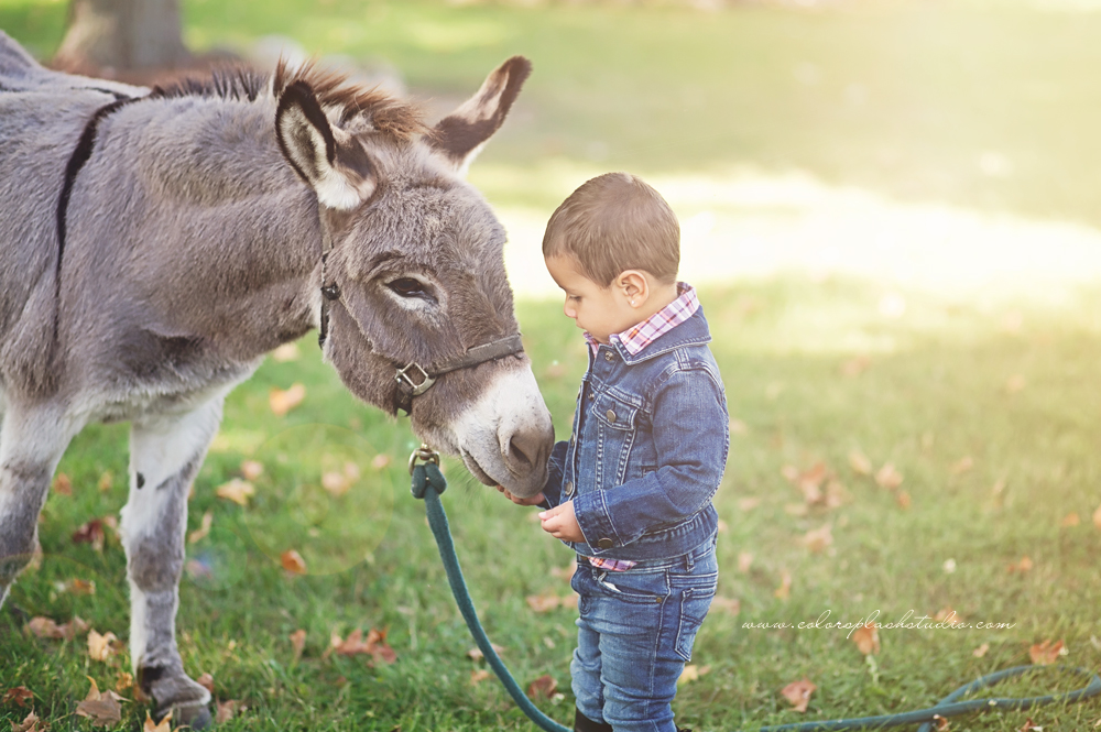 kids-donkey-photography-session