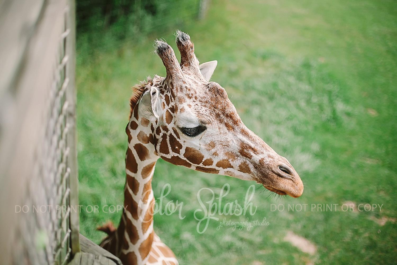 binder-park-zoo_0906