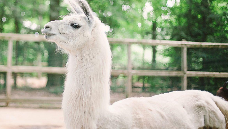 binder-park-zoo_0913